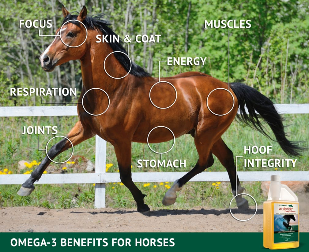 Omega 3 benefits for horses